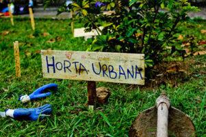 Plantando e colhendo na cidade